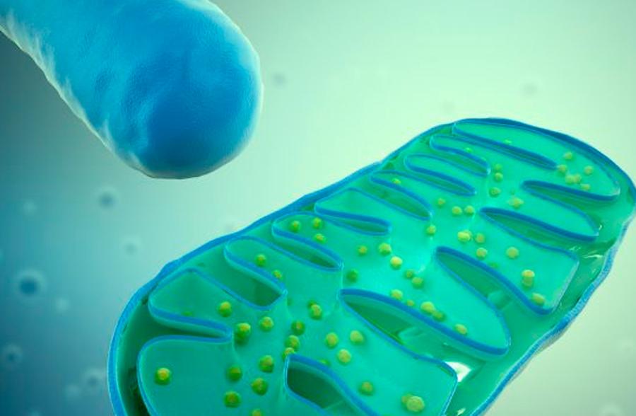 Mutações genéticas no DNA da mitocôndria estão diretamente associados com autismo - Tismoo